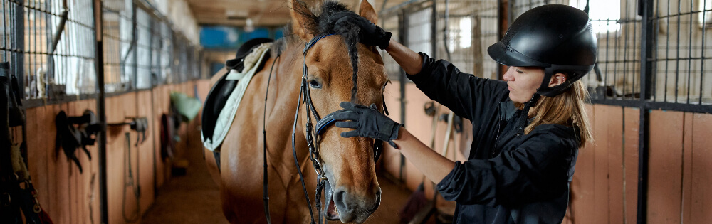 Schutz für Pferdebesitzer